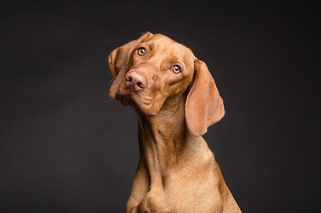 Dogs are not Intelligent As We Previously Thought